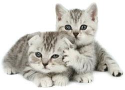 Кошки лысеет нос понос ирвота у кошки